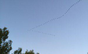 migracion de las aves (1)