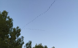 migracion de las aves (2)