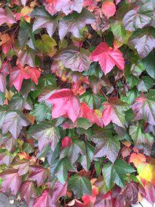 otoño 1