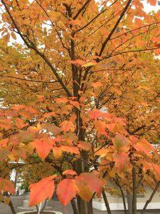 otoño 2