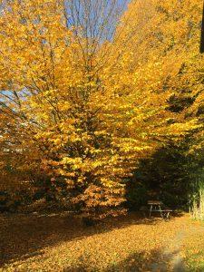 otoño 3219