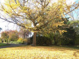 otoño 7