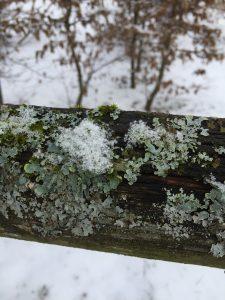 invierno 2